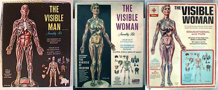Visible Man And Visible Woman Model Kits