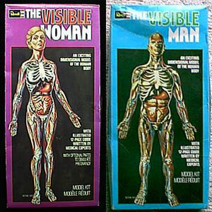 Visible Man and Visible Woman Model Kits
